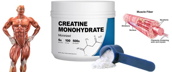 creatine-supplement